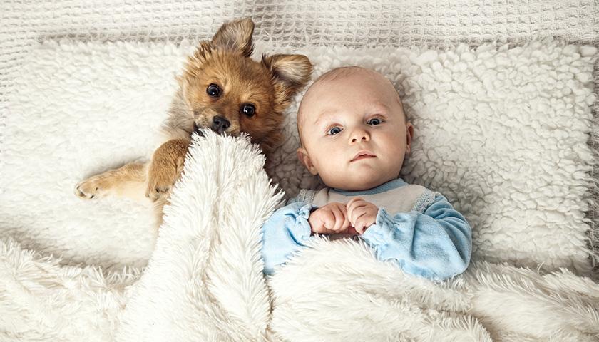 pre-accouchement-animaux